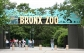 Zoo cheap ticket with unlimited Tram ride discount Bird Park Night Safari River Safari