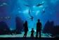 SEA Aquarium cheap ticket discount Sentosa Universal Studios Adventure cove Cable car Zoo