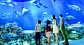 SEA Aquarium cheap ticket discount Sentosa Universal Studios Adventure cove cable Car sentosa line L